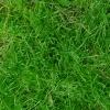 Kleines Rasenstück | Small Sod